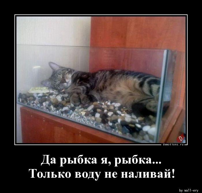 Да рыбка я, рыбка... Только воду не наливай!