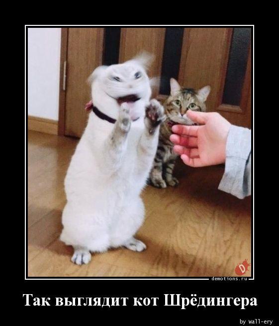 Так выглядит кот Шрёдингера