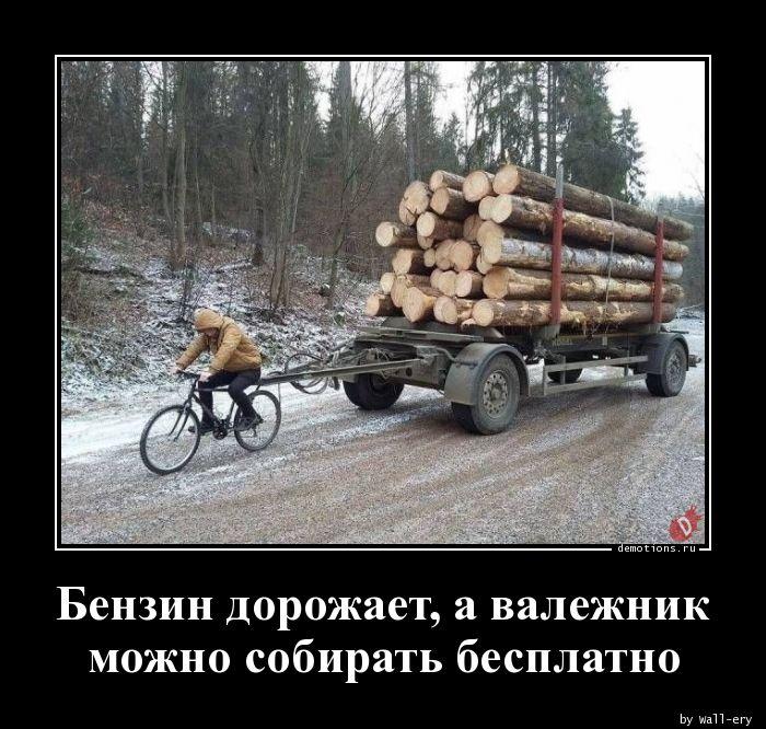 Бензин дорожает, а валежник можно собирать бесплатно