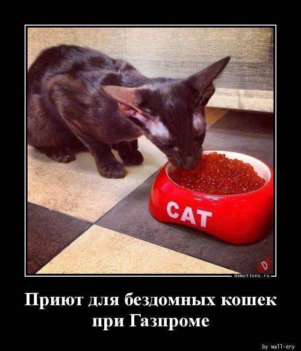 Приют для бездомных кошек при Газпроме