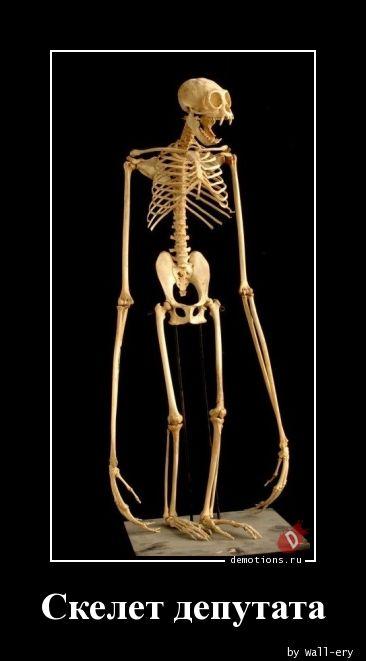Скелет депутата