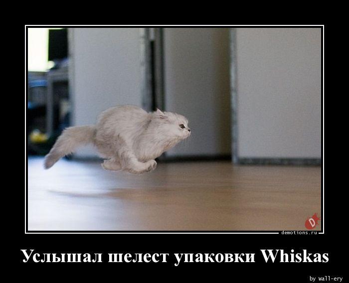 Услышал шелест упаковки Whiskas