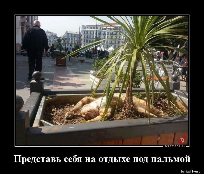 Представь себя на отдыхе под пальмой