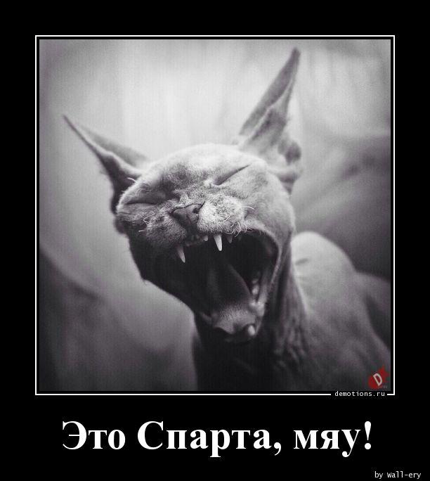Это Спарта, мяу!
