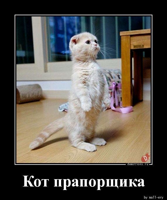 Кот прапорщика