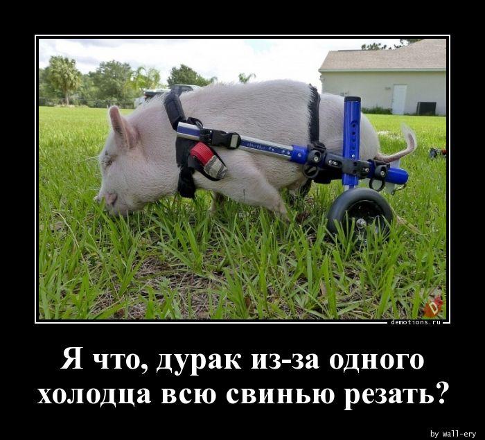 Я что, дурак из-за одного холодца всю свинью резать?