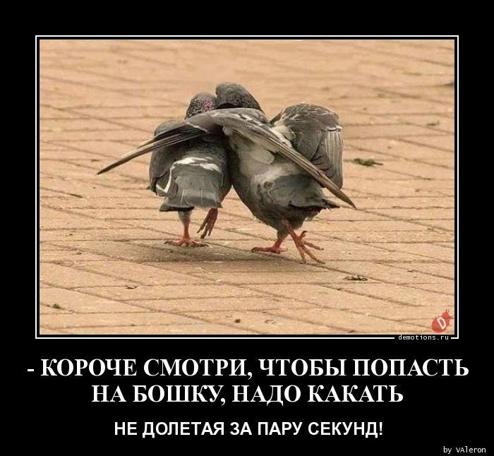 - КОРОЧЕ СМОТРИ, ЧТОБЫ ПОПАСТЬ  НА БОШКУ, НАДО КАКАТЬ