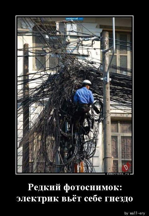 Редкий фотоснимок: электрик вьёт себе гнездо