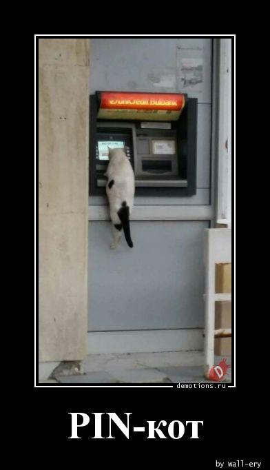 PIN-кот