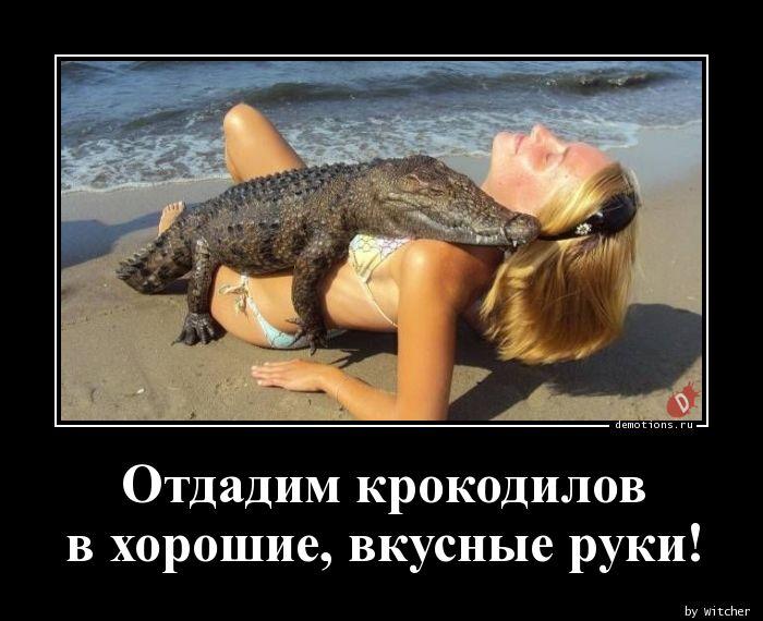 Отдадим крокодилов nв хорошие, вкусные руки!