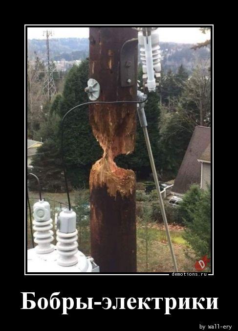 Бобры-электрики