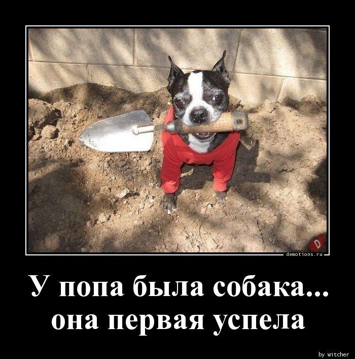 У попа была собака... она первая успела