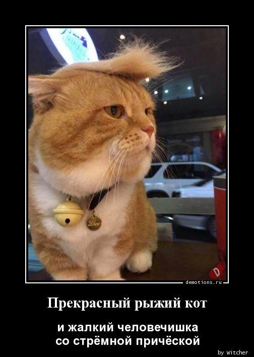 Прекрасный рыжий кот