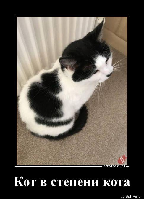 Кот в степени кота