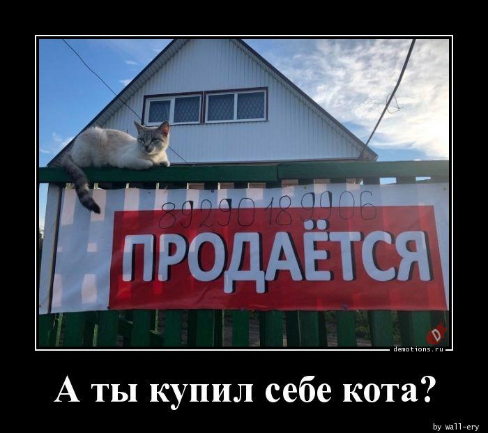 А ты купил себе кота?