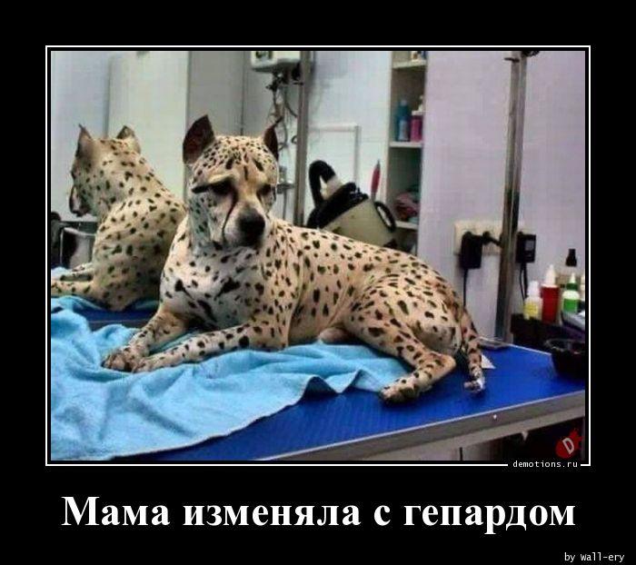 Мама изменяла с гепардом