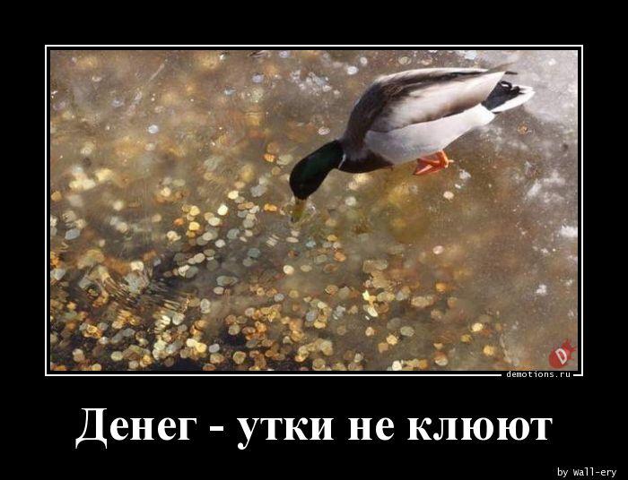Денег - утки не клюют