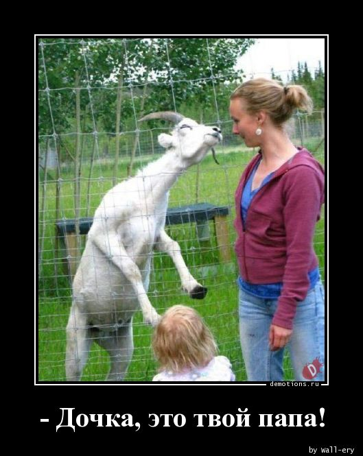 - Дочка, это твой папа!