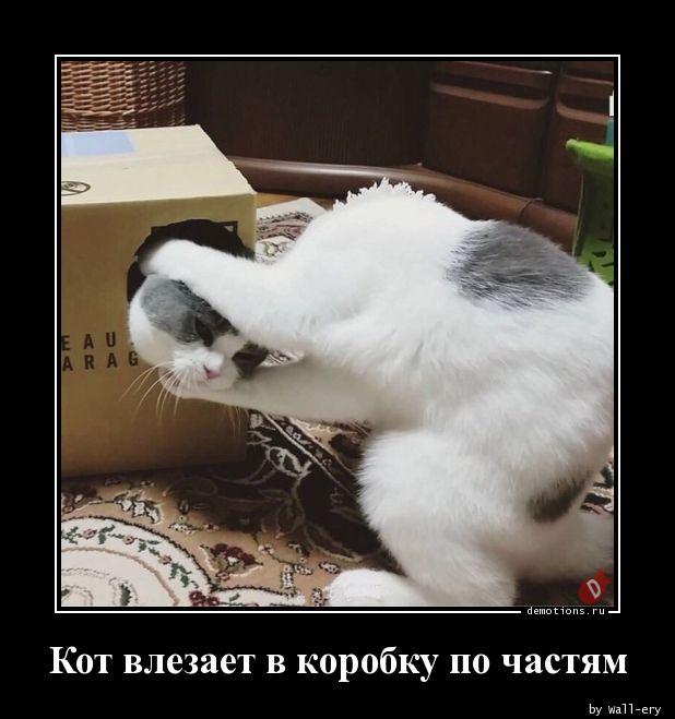 Кот влезает в коробку по частям