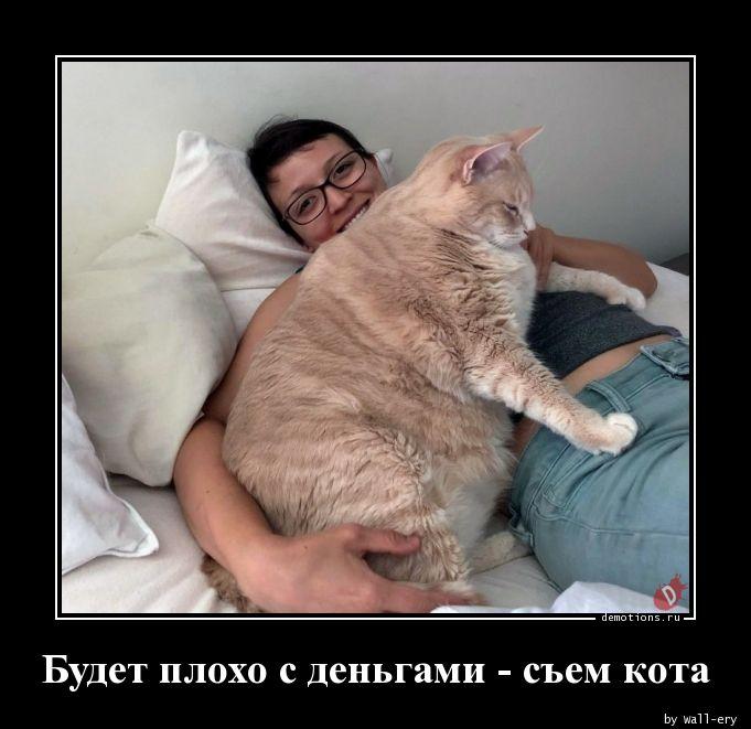 Будет плохо с деньгами - съем кота