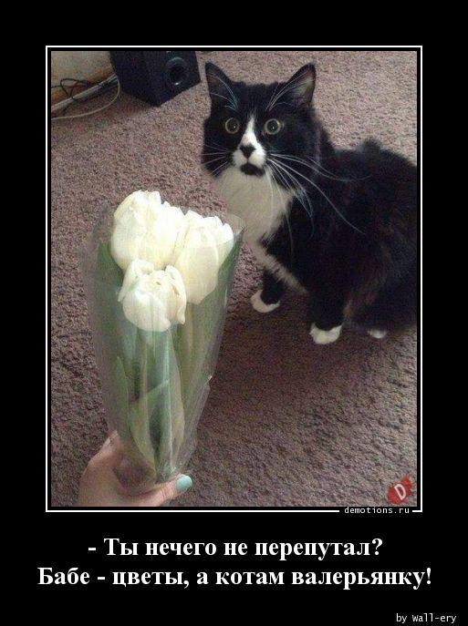 - Ты нечего не перепутал? Бабе - цветы, а котам валерьянку!
