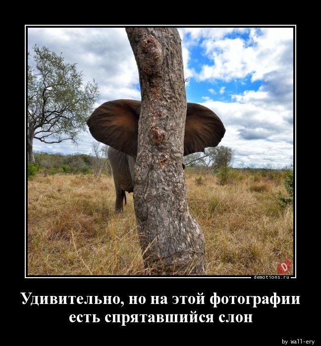 Удивительно, но на этой фотографии есть спрятавшийся слон