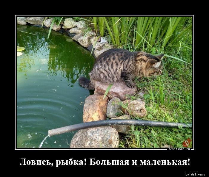 Ловись, рыбка! Большая и маленькая!