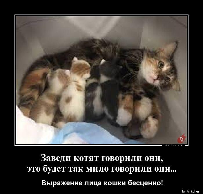 Заведи котят говорили они,  это будет так мило говорили они...