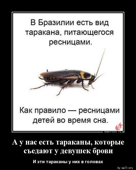 А у нас есть тараканы, которые съедают у девушек брови