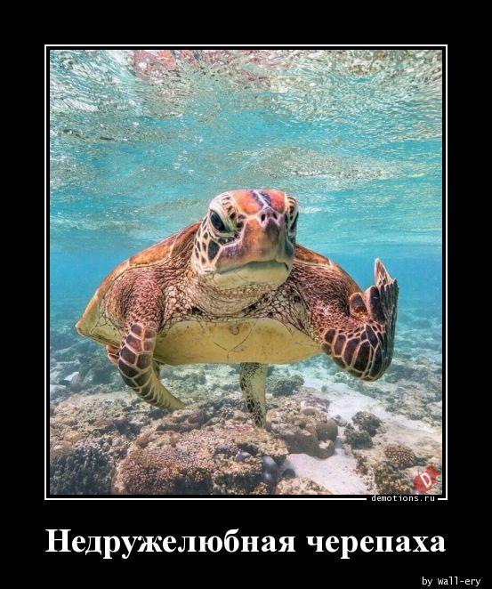 Недружелюбная черепаха