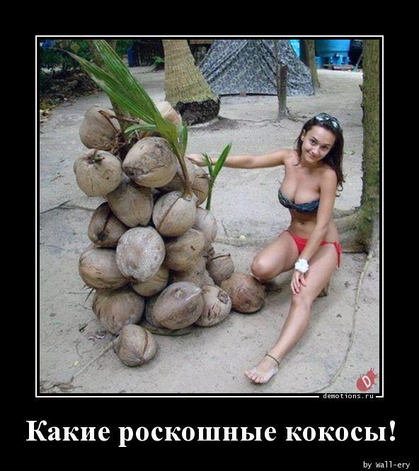 Какие роскошные кокосы!