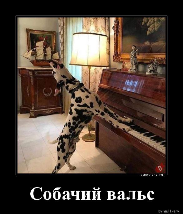 Собачий вальс