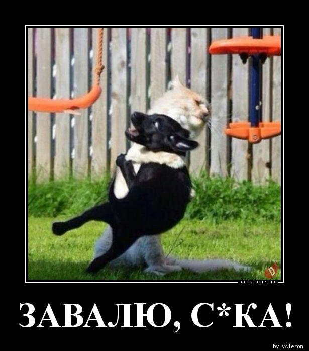 ЗАВАЛЮ, С*КА!