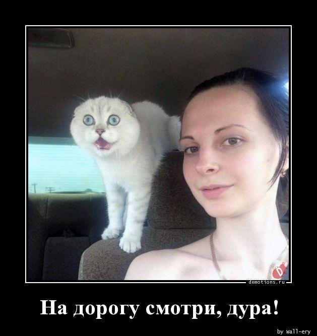 На дорогу смотри, дура!