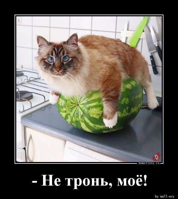 - Не тронь, моё!