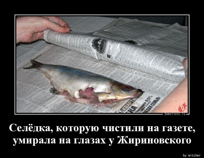 Селёдка, которую чистили на газете, умирала на глазах у Жириновского