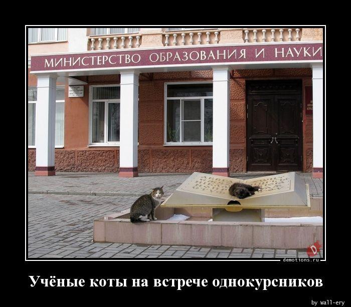 Учёные коты на встрече однокурсников
