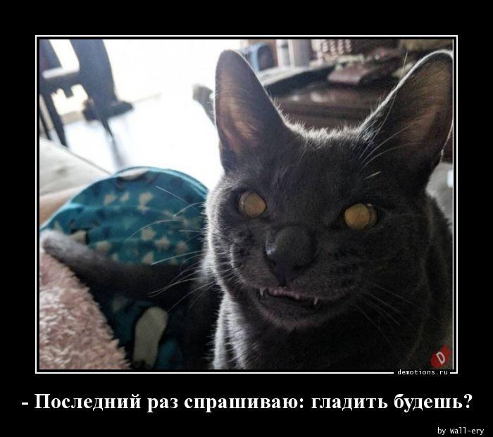 - Последний раз спрашиваю: гладить будешь?