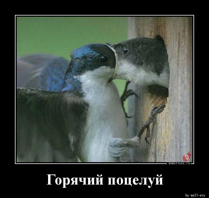 Горячий поцелуй