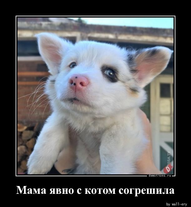Мама явно с котом согрешила