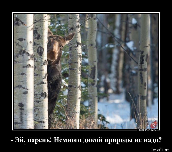 - Эй, парень! Немного дикой природы не надо?