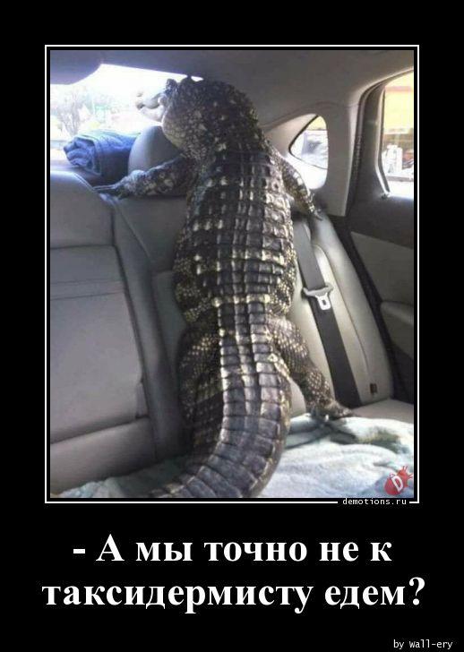- А мы точно не к таксидермисту едем?