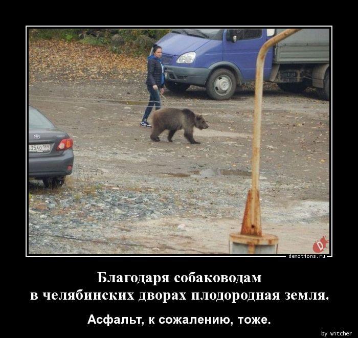 Благодаря собаководам  в челябинских дворах плодородная земля.