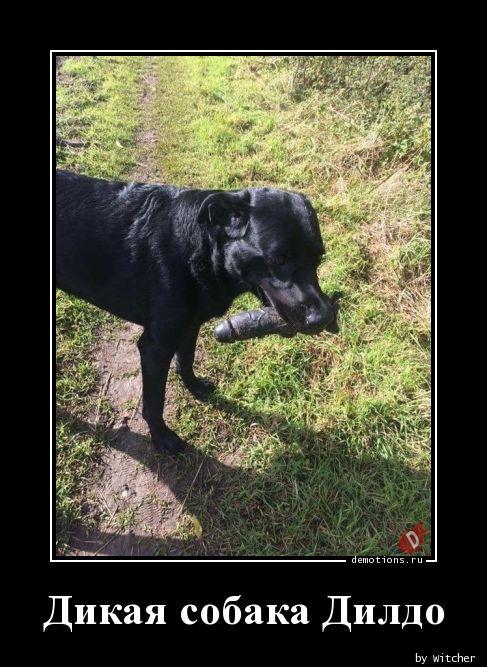 Дикая собака Дилдо