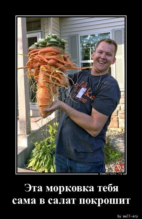 Эта морковка тебя сама в салат покрошит