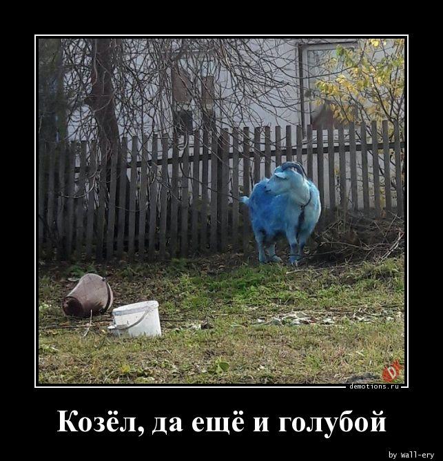 Козёл, да ещё и голубой