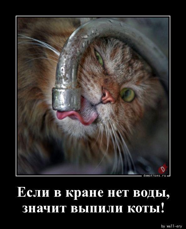 Если в кране нет воды, значит выпили коты!
