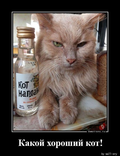 Какой хороший кот!