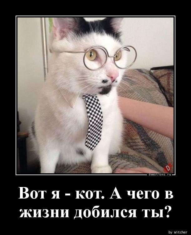Вот я - кот. А чего в жизни добился ты?