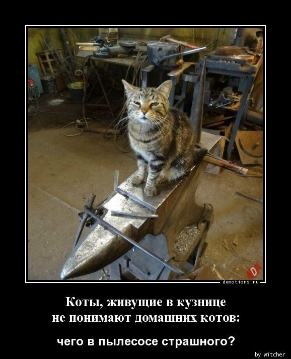 Коты, живущие в кузнице не понимают домашних котов: